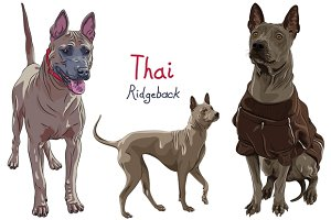 Thai Ridgeback Dog SET
