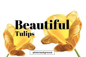 Beautiful Tulips background JPG+PSD