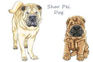Chinese Shar Pei dog SET
