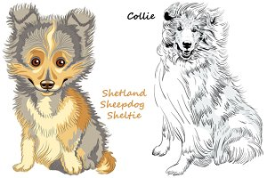 Collie and Sheltie dogs SET