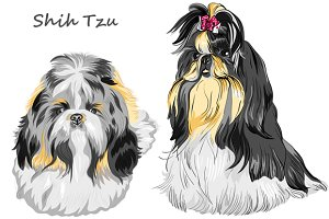Dog Shih Tzu SET