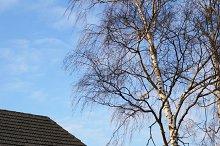 birch&house