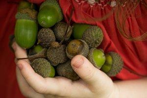 little hand Holding green oak nut