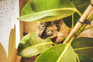The cat in the plant