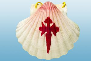scallop shell sign ISOLATED