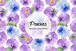 Watercolor spring pansies