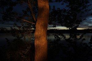 Light Painting: Tree