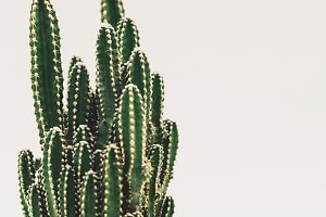 Cactus Castle