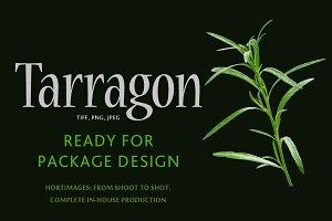 Tarragon (fine herb)