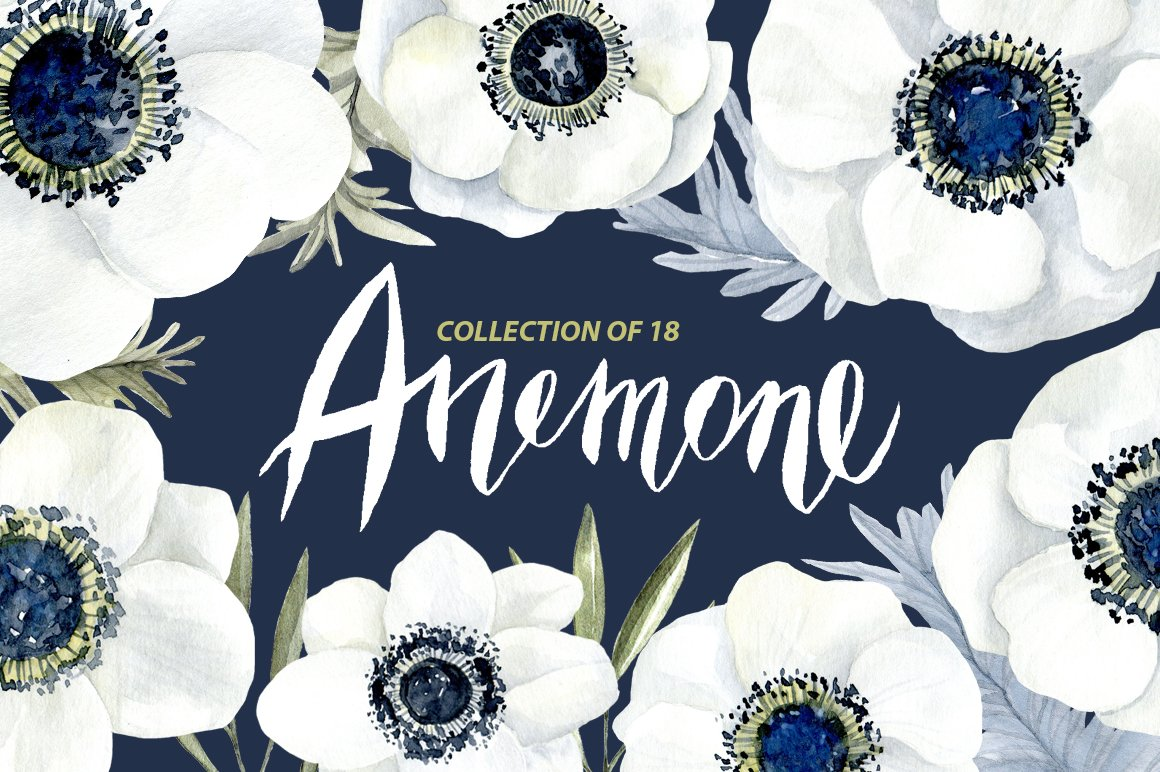 Watercolor anemone white flowers graphics creative market mightylinksfo Choice Image