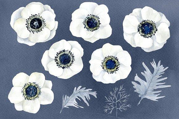 Watercolor Anemone White Flowers Graphics Creative Market