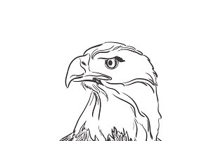 eagle, head, sketch, vector