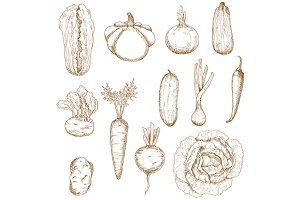Healthy organic vegetables sketches