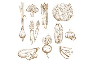 Vintage sketches of farm vegetables