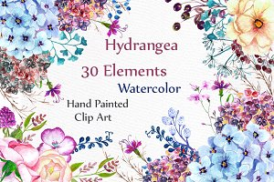 Watercolor hydrangea flowers clipart