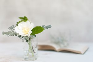 Spring Camellia Bloom/Book Stock