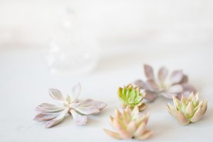 Scattered Mini Succulents