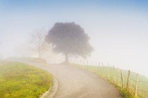 Foggy path with tree