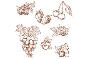 Fruits and berries sketch set