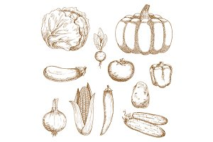 Retro sketches of organic vegetables