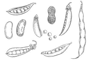 Sketch icons of legumes