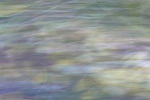Forest Blur 1