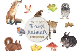 Detailed Forest Animal Illustrations