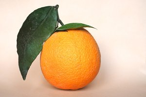 Orange fruit (Citrus)