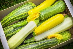 Fresh healthy green zucchini
