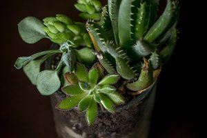 Succulents in small glass jar