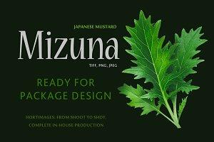 Mizuna (Japanese Mustard )