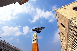 Bella Italia series. Venice - the Pearl of Italy. Pigeon flying over St. Mark's Square (Piazza San Marko). Blue sky with some white clouds.