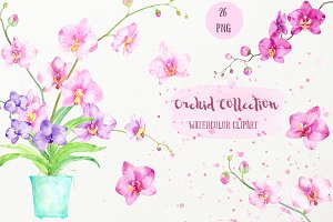 Watercolor Clipart Orchid Collection