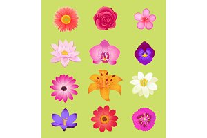 Flower Color Set