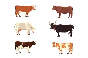 Set cows and farm animals