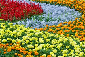 Summer colorful flowerbed.