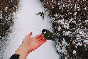 Bird Feeding on a Hand