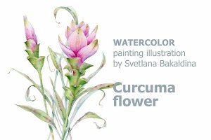 Watercolor cucruma flower