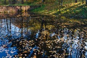 Pond with yellow leaves
