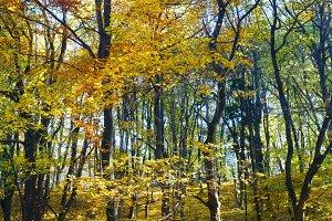 Carpet of autumn leaves in park.