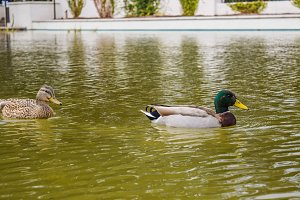 Duck bird Gardens Park LA