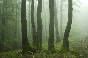 Trees in green forest with fog