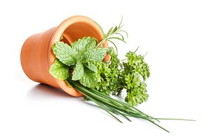 Herbs in pot