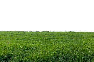 green field isolated over white