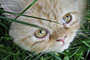 Linda The Cat