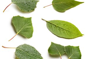 set of leaf with drop