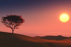 lonely tree on desert sunset