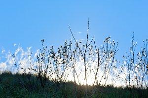 Grass (close up) on hill.