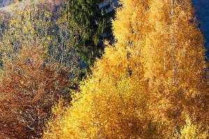 Autumn mountain slope