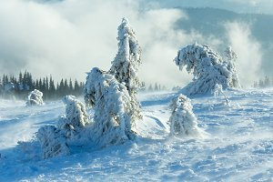 Winter mountain misty view.